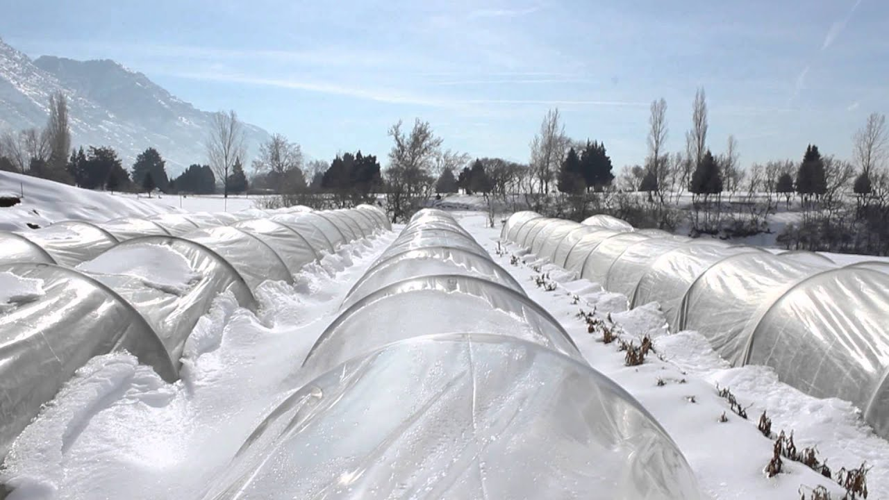 growing vegetables in the winter utah u0027s community supported