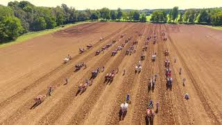 Guinness World Records Mule Plowing Attempt Woodbury, TN