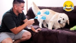 Funny Dog Reaction to Water Sprayer [BEST REACTION EVER]