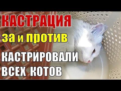 #35 Как и зачем мы кастрировали всех котов? Зачем кастрировать кота: Опасные вирусы кошек