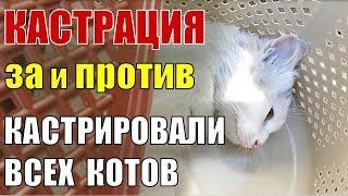 видео Почему кастрируют котов