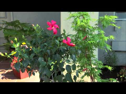 How to Create Your Own Landscape Garden