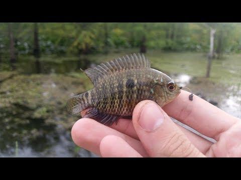 Micro Fishing Lake Fran For Swamp Darters