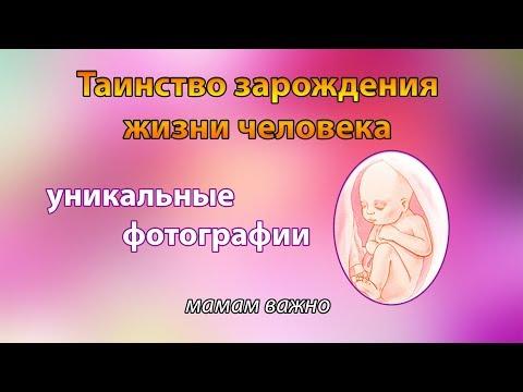 Невероятные фото // развитие плода в утробе матери