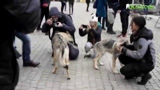 W Olsztynie zawyli dla wilka