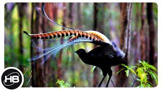 Самые Забавные Брачные Танцы Птиц