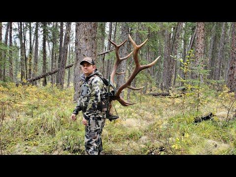 2019 Elk Hunting, Northern BC (MORNING BUGLES)