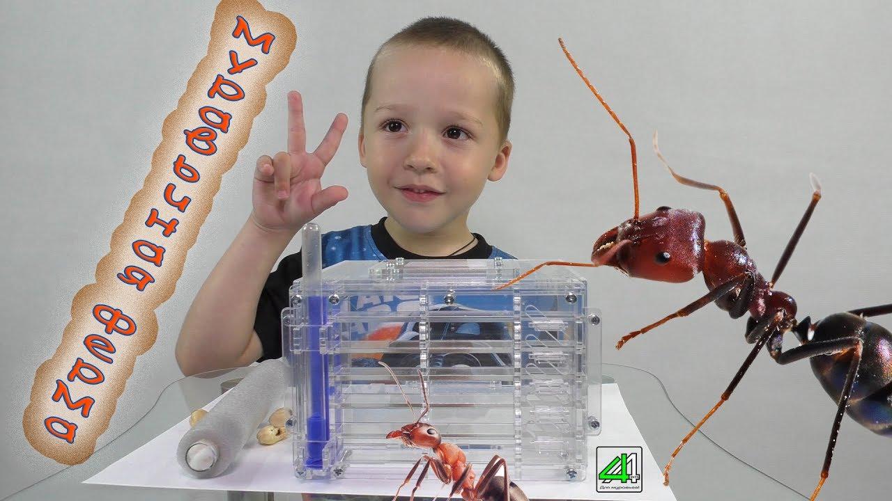 Муравьиные фермы, формикарии и муравьев купить в antfamily. In. Ua.