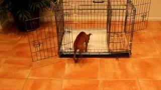 How To Potty Train A Dog - House Training Dog Tips - Housebreaking Dogs - Dog Potty Training Fast