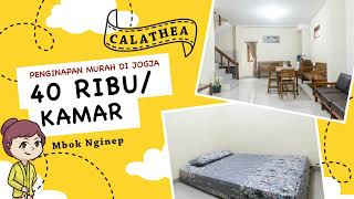 Review Penginapan Murah di Jogja: Calathea Homestay (40 rb / kamar, tahun 2021)