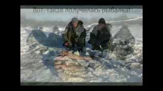 ловля сома зимой на балансир в Ярославской облости.