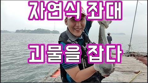 [갑프로] 자연식 좌대 생새우 광어 우럭 숭어 낚시 대물을 낚아봐~