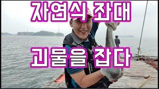 [갑프로] 자연식 좌대 생새우 광어 우럭 숭어 낚시 대…
