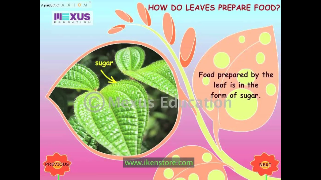 root stem and leaf youtube
