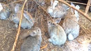Кролики в вольере, автономный режим ноябрь 2017г.