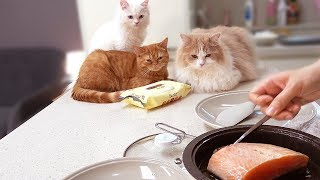 고양이가 좋아하는 연어요리 방법