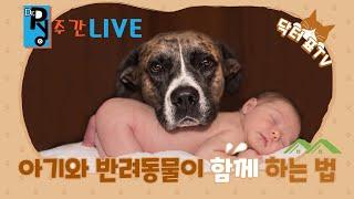 닥터표TV 주간라이브 | 주간 바이러스 동향 | 코로나19 백신 | 집콕이 더 좋다는 아이들 | SBS TV…