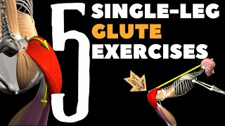 5 Single-leg Glute exercises | Watch all active muscles