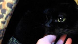 Домик для кошки Кати