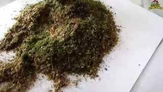 Семья Бровченко. Рецепт вкусной приправы к любым блюдам из семян и зелени.