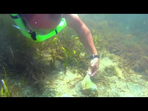 South Padre Island Snorkeling - The Daytripper