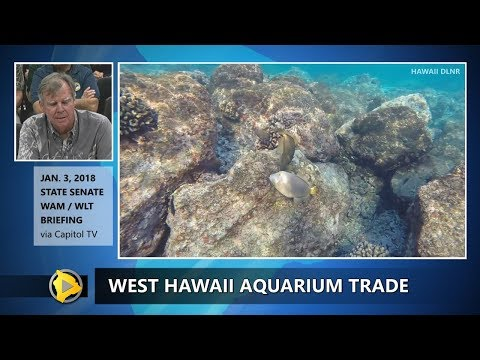 West Hawaii Aquarium Trade Halted (Jan. 3, 2018)