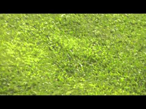 Fisher Cats Baseball Camp - Clip 12