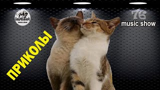 РОМАНТИЧЕСКИЕ КОТЫ И КОШКИ 🐱 funny cats   ПРИКОЛЫ С ЖИВОТНЫМИ   Music Show 2-76