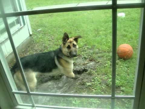 Dog caught digging - very funny!
