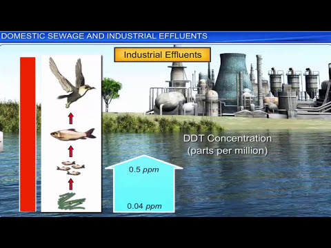 CBSE Class 12 || Environmental Issues || Full Chapter || by Shiksha House