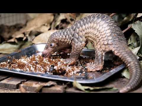 Phnom Tamao -  A sanctuary for Cambodia's rescued wildlife