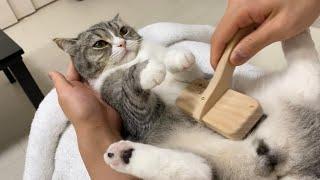 サロンで全身ケアされてご満悦な猫がこちらです…笑