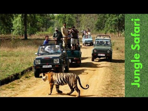 Jungle Safari | Gorumara Park |  Lataguri forest | Dooars | Mitzinfinity