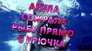 Прикол на рыбалке Акула сожрала рыбу!