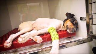 rescatamos-a-un-perrito-encontrado-en-un-contenedor-a-40-grados-bajo-el-sol