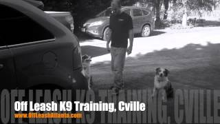 Pup Manners, What Are They Good For? | Australian Shepherds | Harrisonburg Dog Trainers