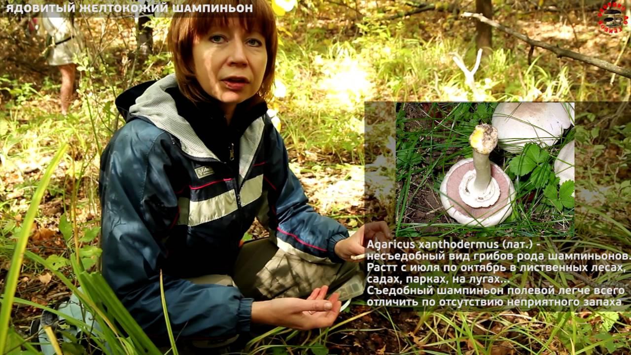 Шиитаке или иначе чёрный гриб изначально начали выращивать в китае и японии. На сегодняшний день этот гриб взращивают и продают во многих.