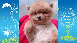 The cutest cat and dog blink video | Funny animal vines