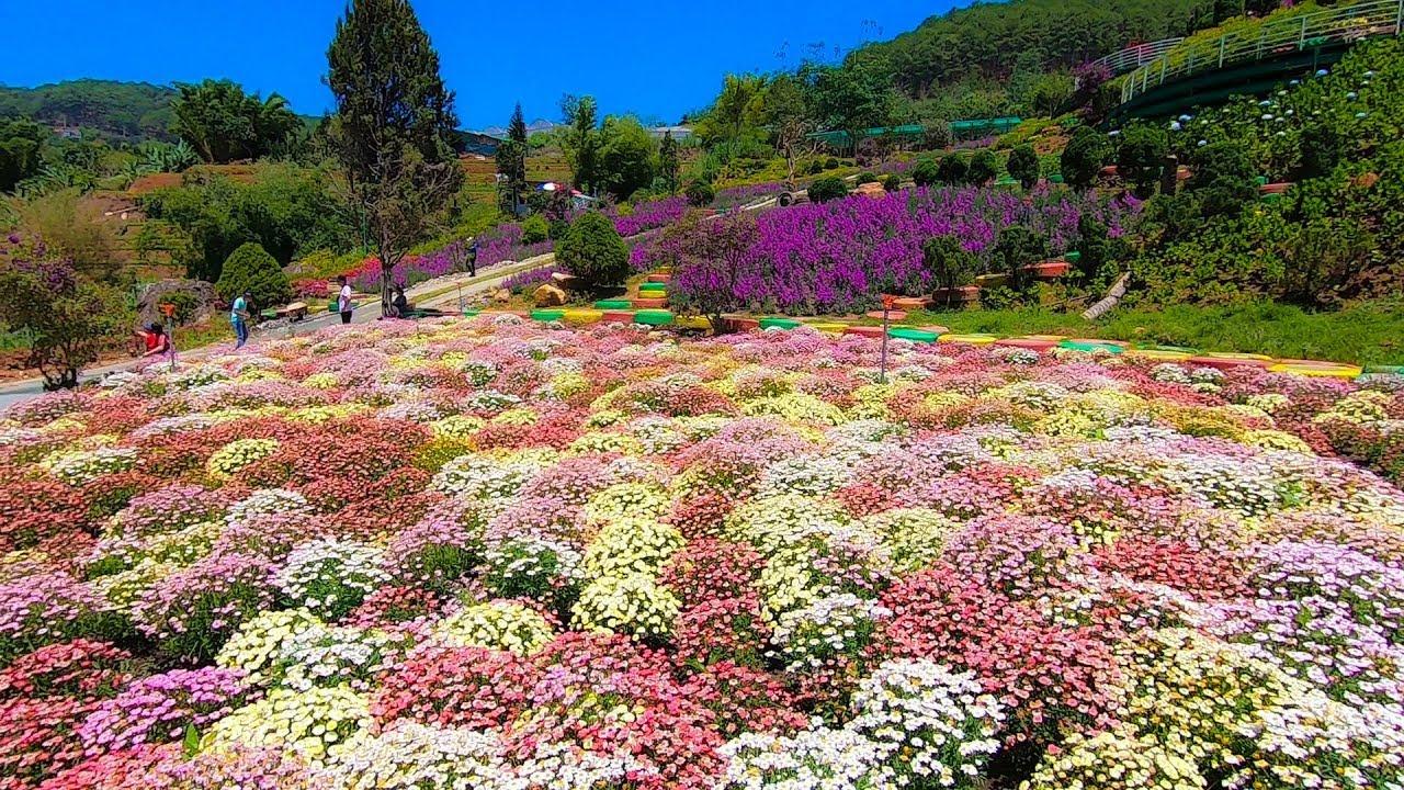 Quê Garden | Thiên đường Hoa check in sống ảo tuyệt đẹp ở đèo ...