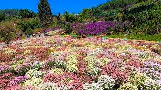 Quê Garden | Thiên đường Hoa check in sống ảo tuyệt đẹp ở đèo Mimosa Đà Lạt
