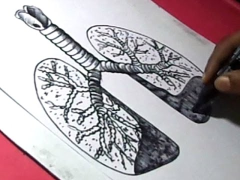 lungs sketch how to draw human lungs drawing for kids step by step 2148