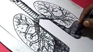 How to Draw Human Lungs Drawing for kids Step by step
