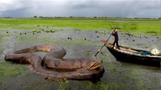 GIANT SNAKE IN THE WORLD - BIGGEST SNAKE FOUND ON EARTH Wild Nature