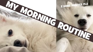 My Morning Routine as a Japanese Spitz Dog