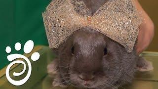 Популярные Породы Кроликов. Все О Домашних Животных
