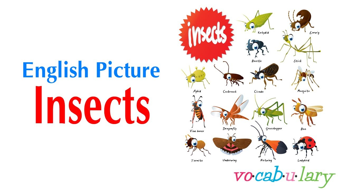Insects ABC - Insect names to learn the alphabet