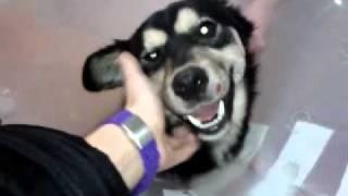 Fundacja Głosem Zwierząt - LUCKY - Wizyta u weterynarza