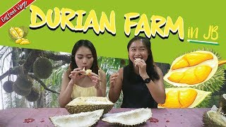 We visited a Durian Farm in JB and Tried 10 Durians   Eatbook Vlogs   EP 45