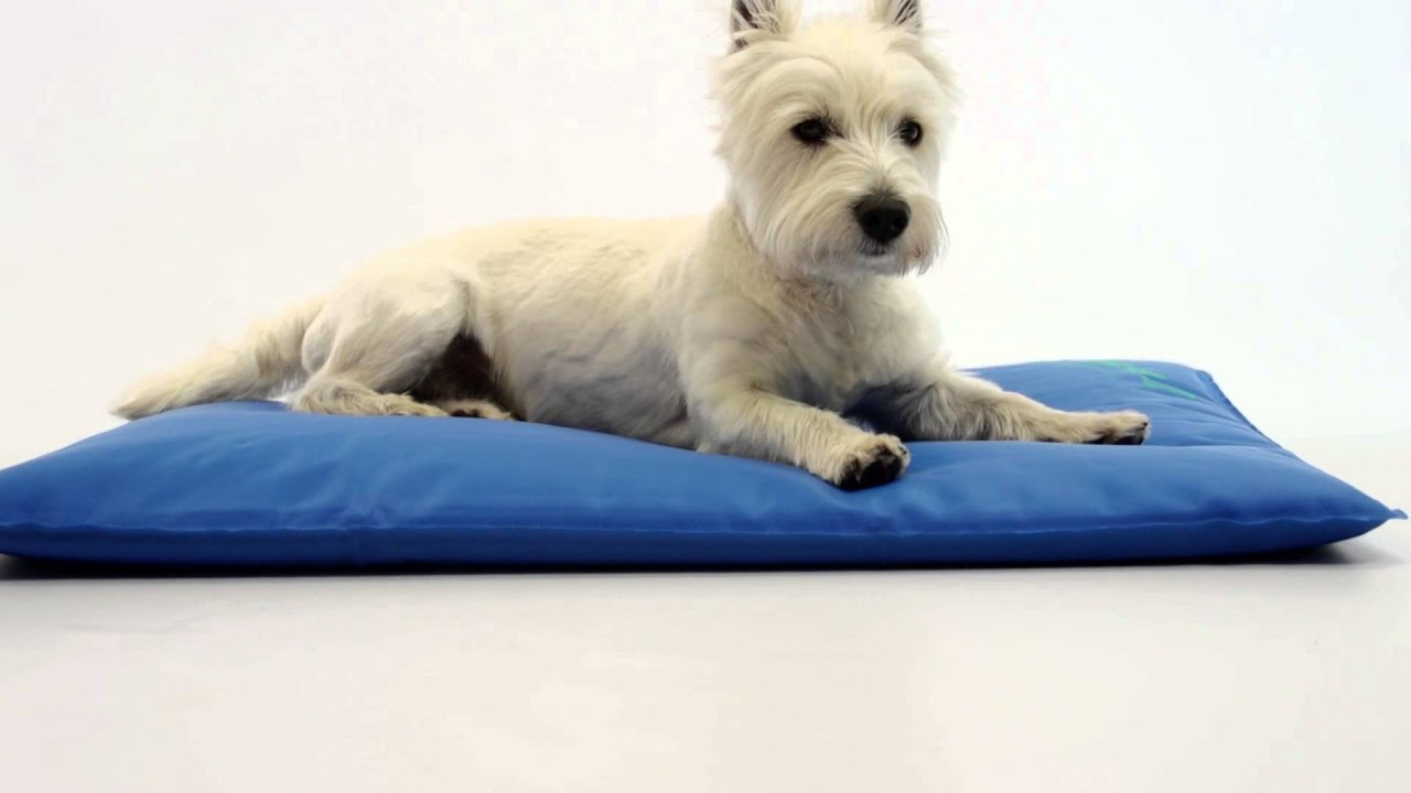 K&H Cool Bed III Cooling Dog Bed - YouTube