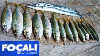 Foça'da Eşek İstavriti ve Zargana avı Fishing for horse mackerel アジングゲーム